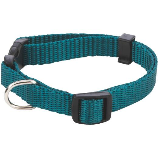 Westminster Pet Ruffin' it Fashion 8 In. to 12 In. Nylon Dog Collar